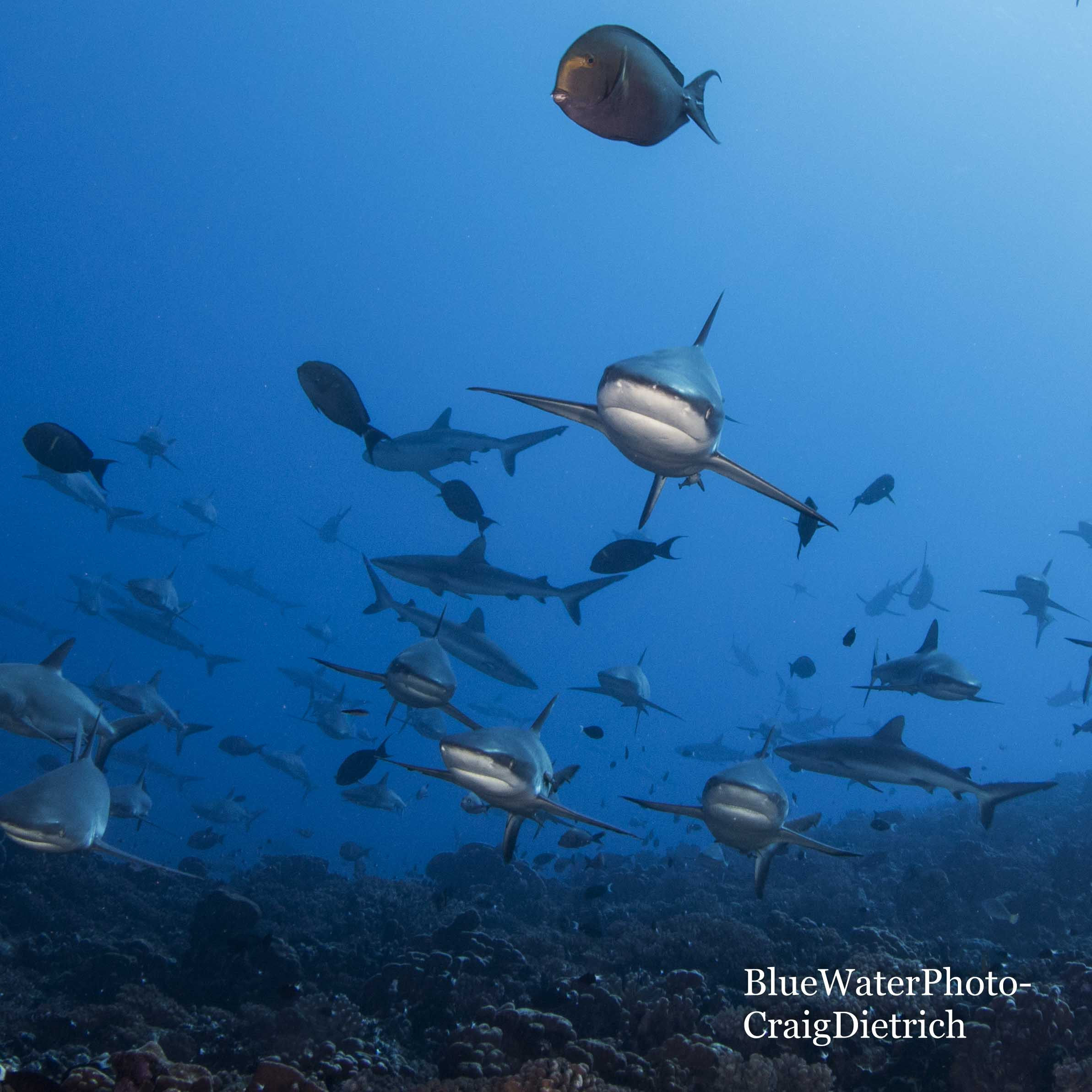 French Polynesia - Grouper Spawning Event