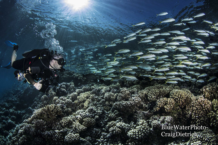 Grouper Spawning - French Polynesia