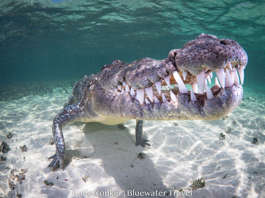 Mexico Crocs & Cenotes 2019 Trip Report