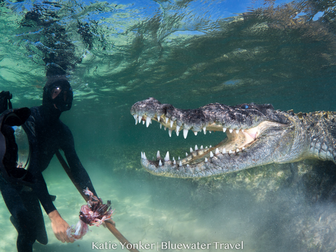 crocs and cenotes trip