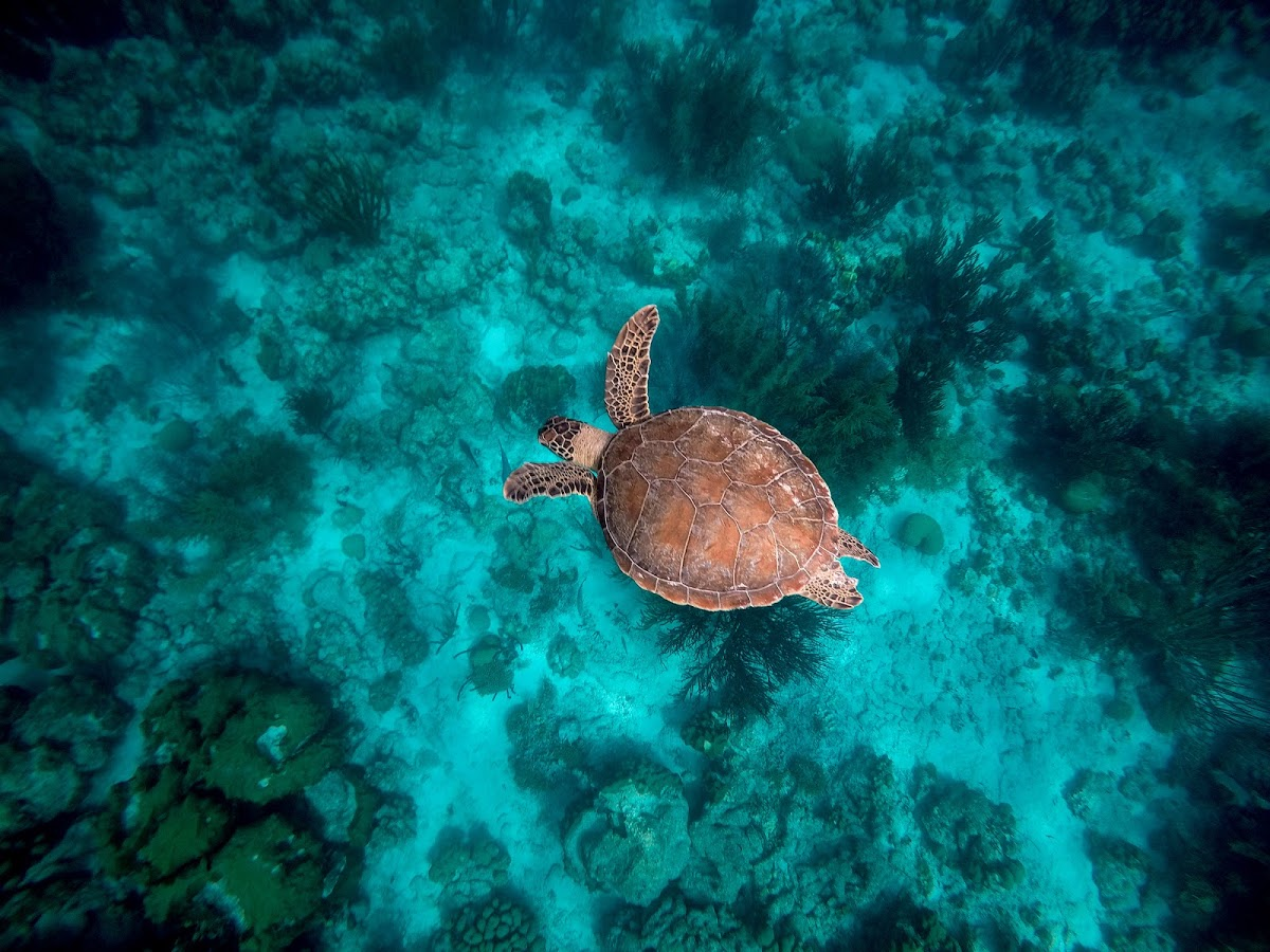 Delfins Beach Resort Bonaire's underwater