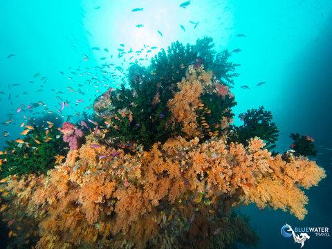 Fiji underwater photo