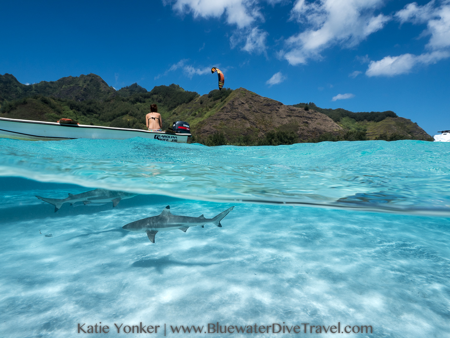 shark diving french polynesia