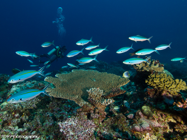 Fiji corals