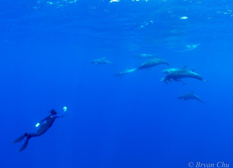 Galapagos dolphins Darwin