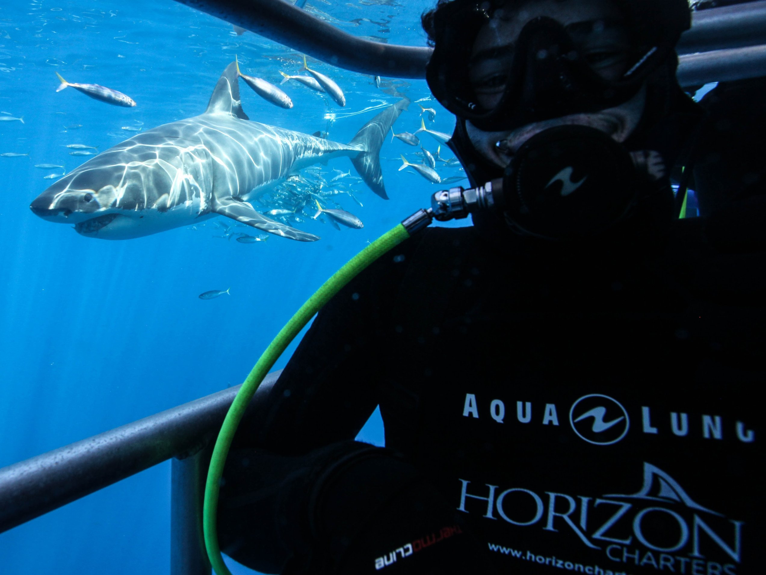 Horizon Charters Guadalupe Liveaboard