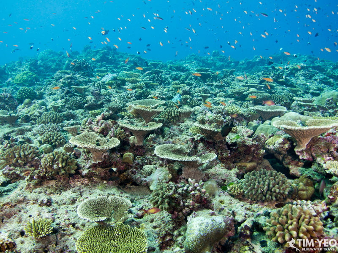 Sri Lanka & Maldives Trip Report 2019