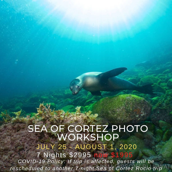 Sea of Cortez Photo Workshop