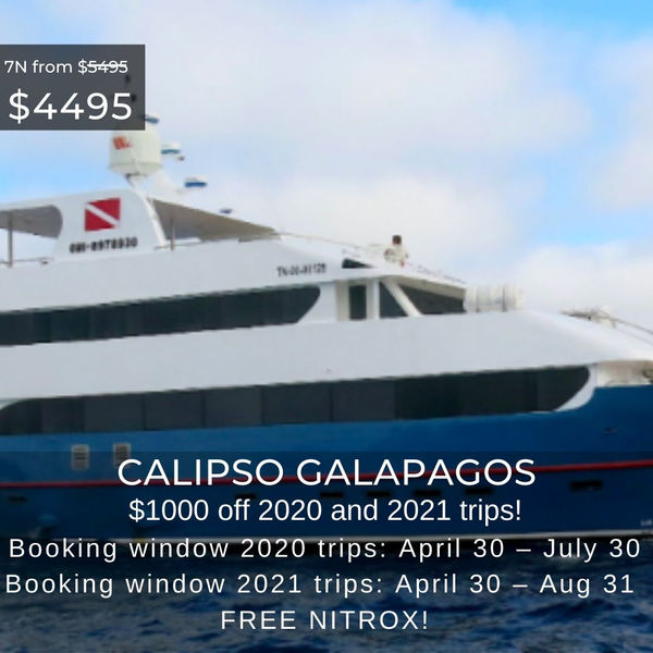 Calipso Special May 2020