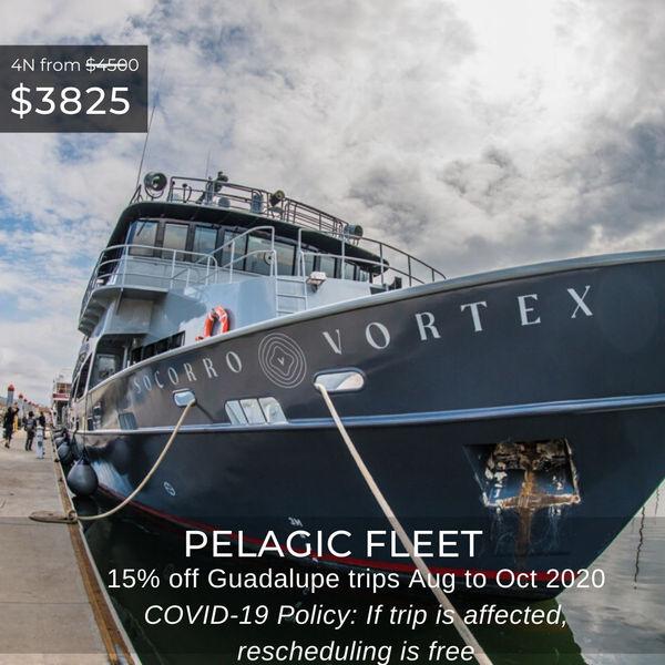 Pelagic Fleet Special May 2020