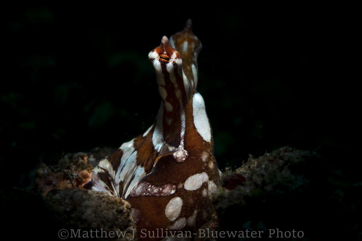 Lembeh Underwater Photo