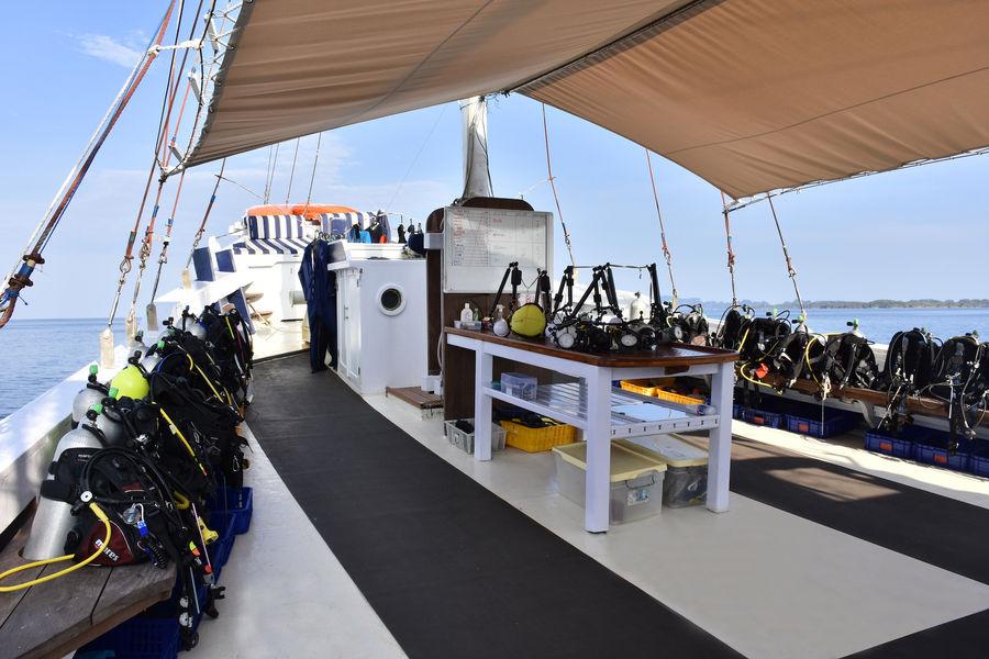 msy seahorse dive deck