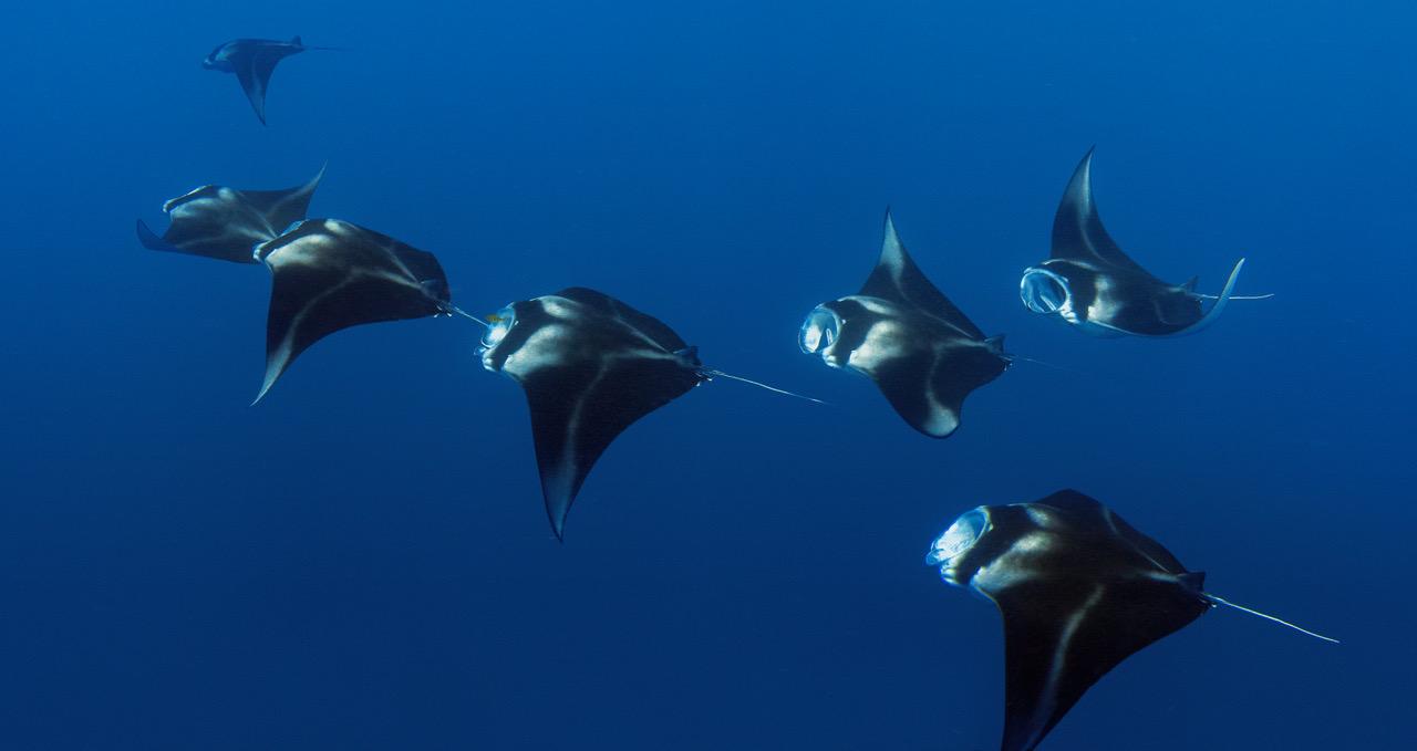Oneta Resort Fiji Underwater Photo