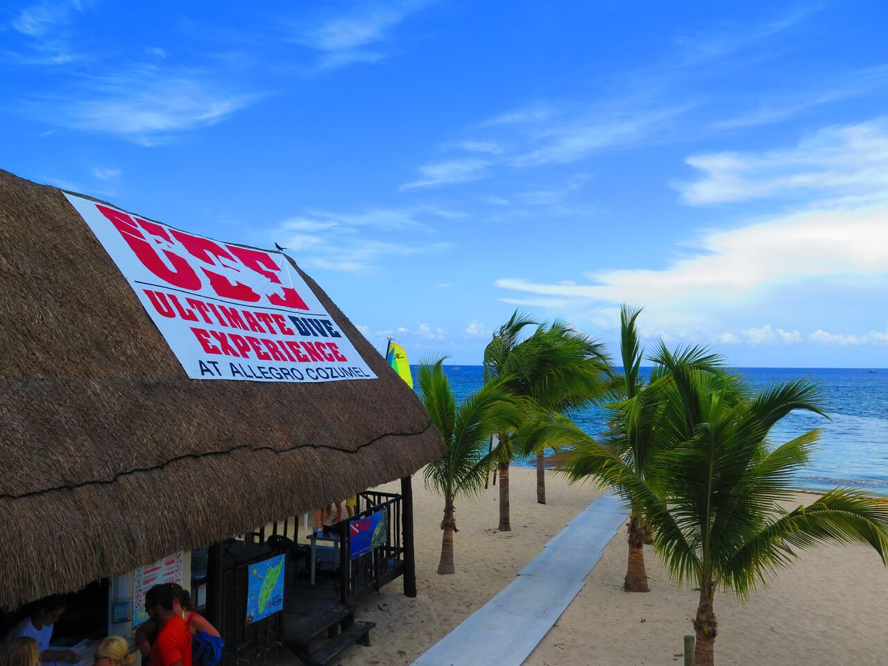 Pro Dive Mexico Bluewater Dive Travel