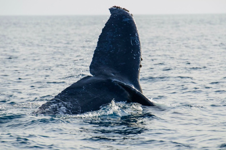 Pelagic Safari's Cabo Whale Watching