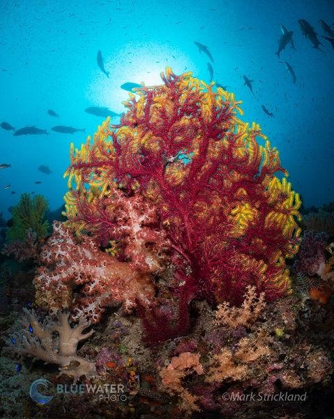 boo coral raja ampat