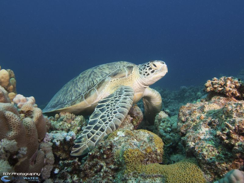 Red Sea underwater photo