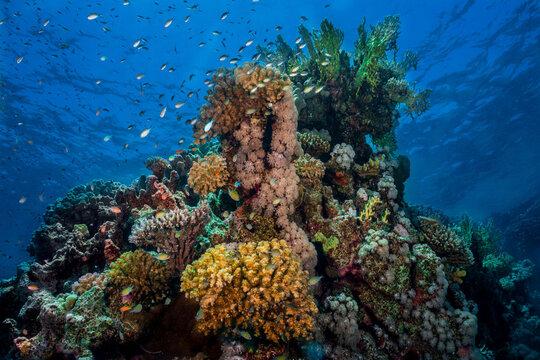 Red Sea 2019 Trip Report