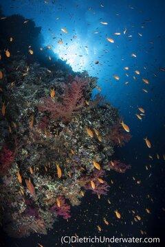 Red Sea underwater photo by Craig Dietrich