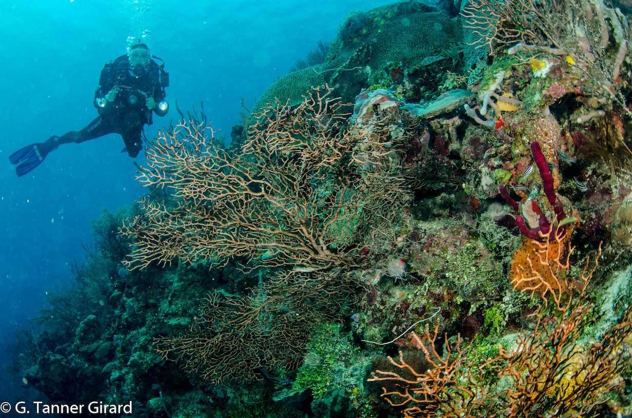 Reef house resort roatan reviews specials bluewater for Roatan dive resort