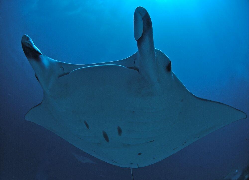 Palau underwater photo by Christoph Hoppe