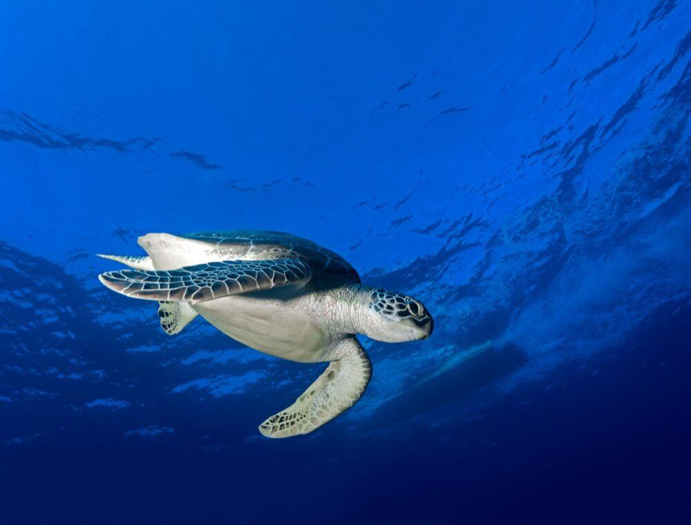 Palau underwater photo by Marc Stickler