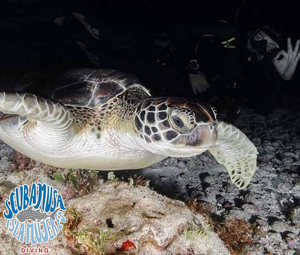 Scuba MUSA Isla Mujeres Underwater Photo