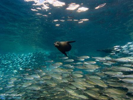 La Paz Underwater Photo