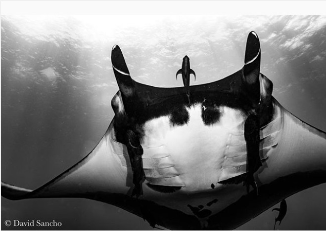 Socorro underwater photography by David Sancho