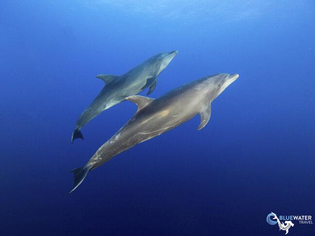 Socorro underwater photo