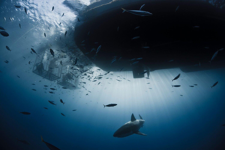 Socorro Vortex Guadalupe Underwater