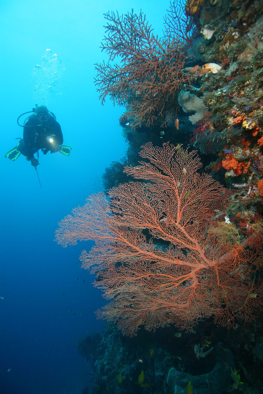 Sea Safari VII Liveaboard