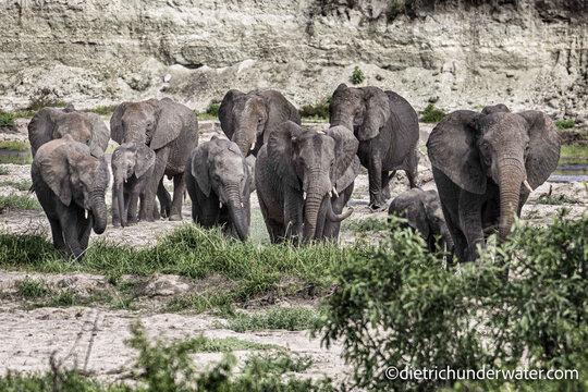 Tanzania Big Game Safari