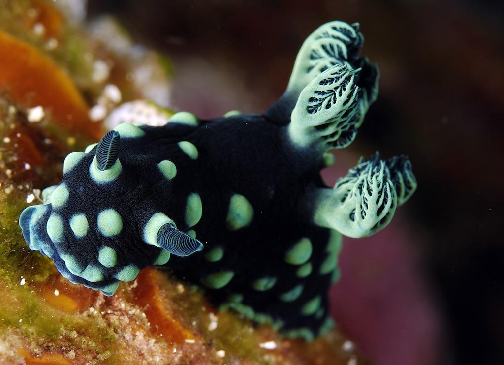 Tomptotika Dive Lodge Sulawesi