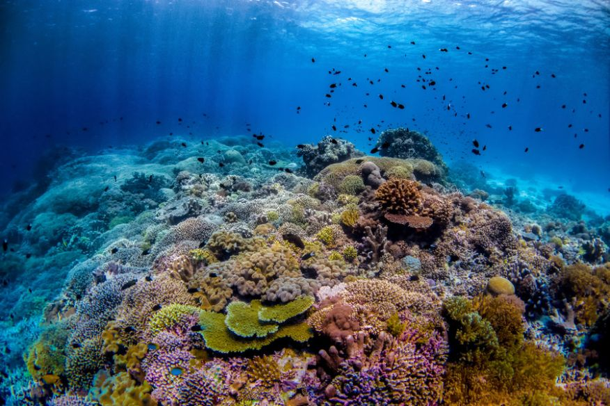 Tubbataha Reefs Natural Park is the epicenter of biodiversity of the Philippines