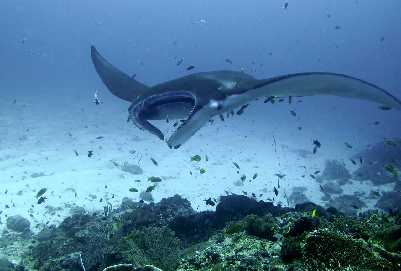 Komodo Underwater