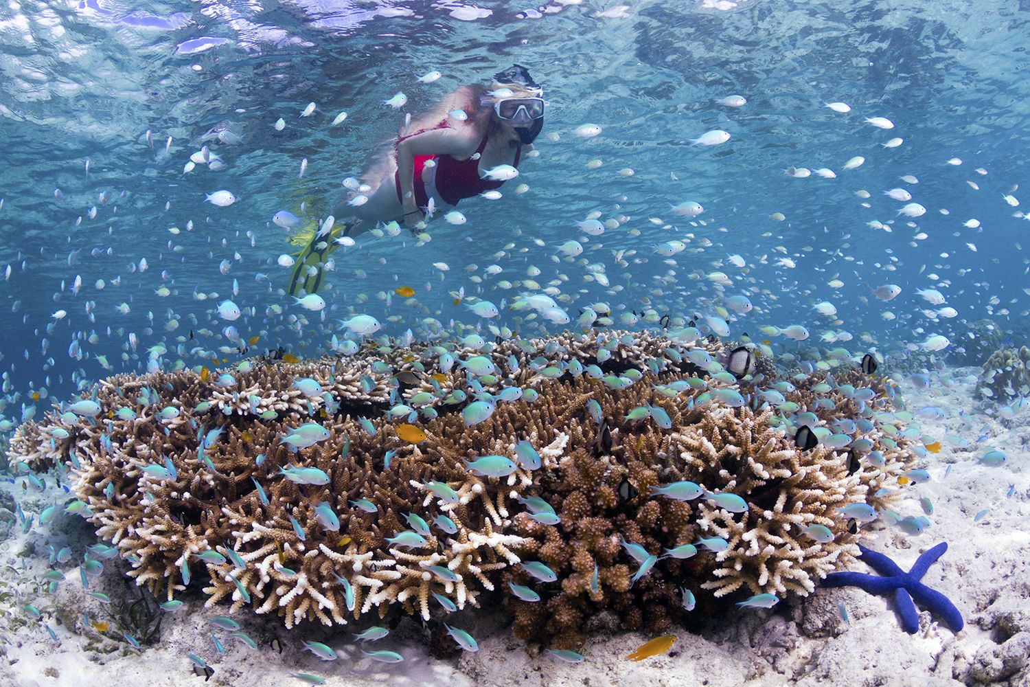 Snorkeling on the house reef in front of bungalows – photo Walt Stearns