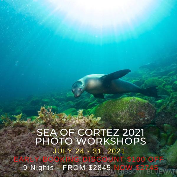 Sea of Cortez Photo Workshops 2021