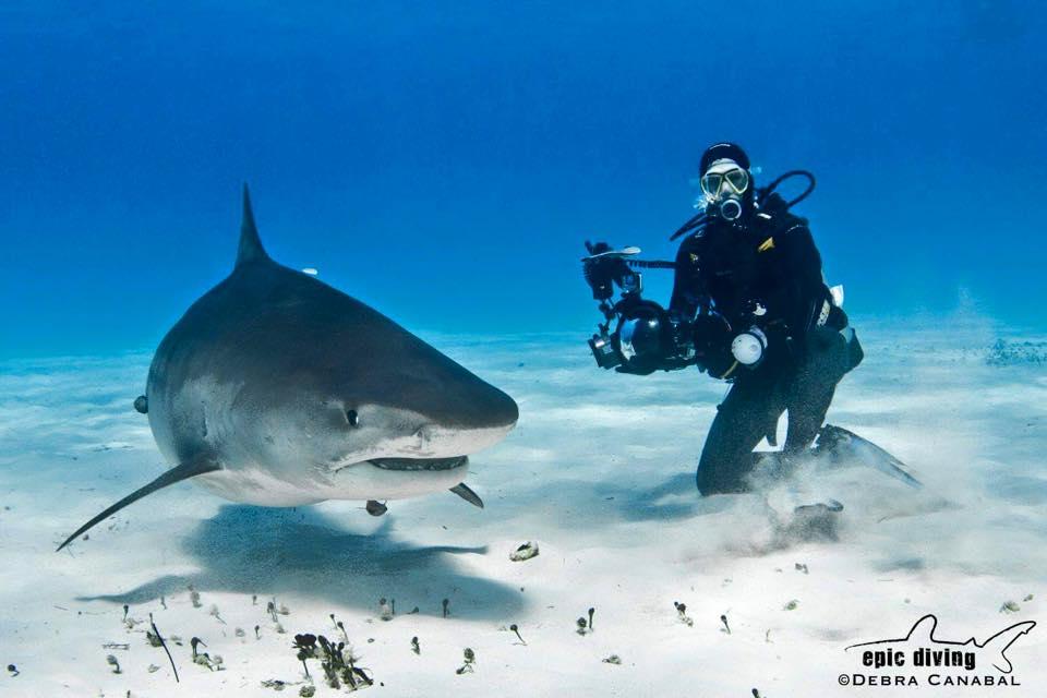 Epic Diving Bahamas Dive Trip Reviews & Specials