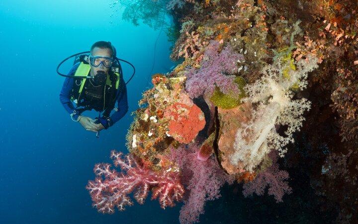 Magic island dive resort moalboal bluewater dive travel - Magic oceans dive resort ...