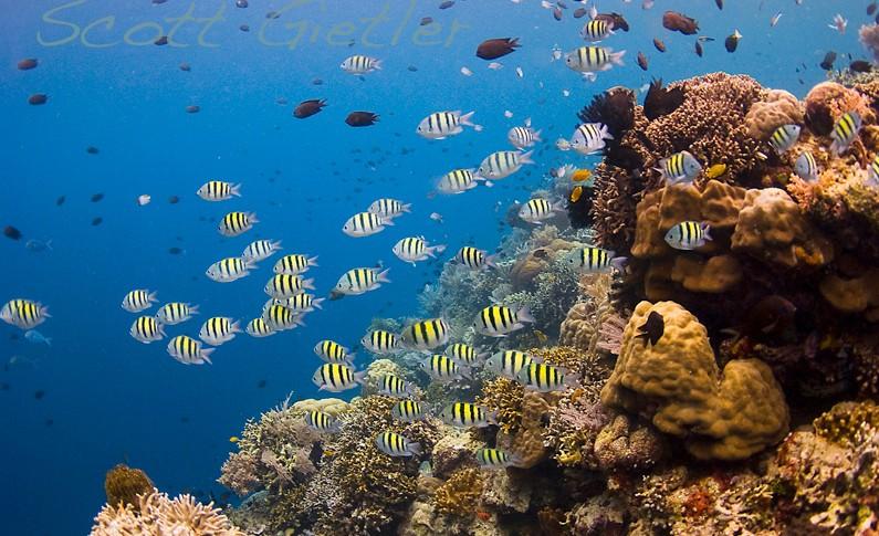 Manado travelers +62812 8733 8756 tour guide for family.