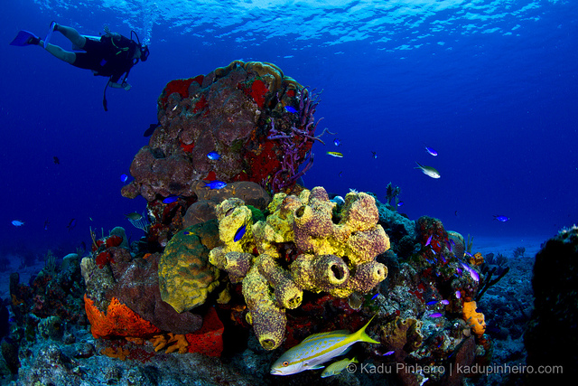 Cozumel scuba diving travel guide dive resorts best time to dive bluewater dive travel - Cozumel dive packages ...