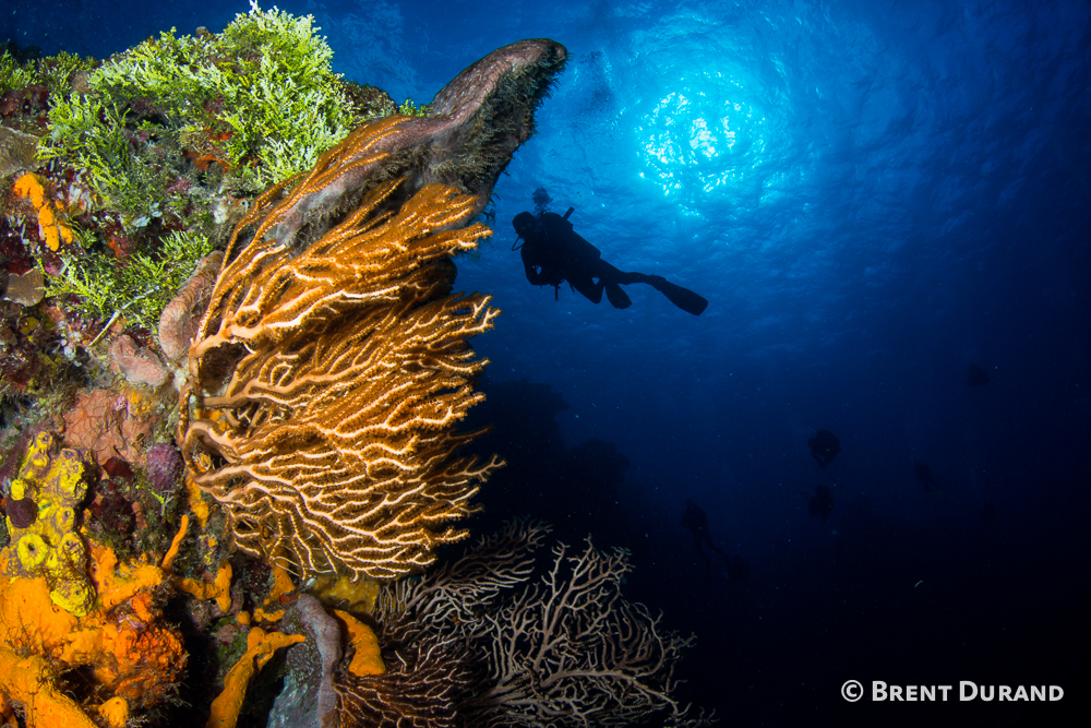 Cozumel Scuba Diving Travel Guide Dive Resorts Best Time