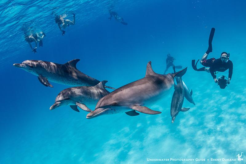 bimini bahamas trip report bluewater dive travel