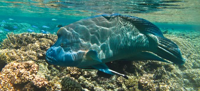 French Polynesia Dive Travel Guide | Bluewater Dive Travel