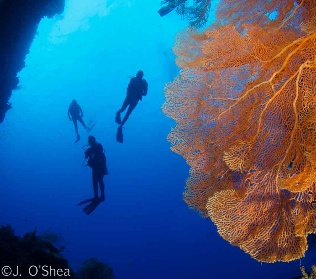Palau scuba diving travel guide best dive resorts liveaboards best time to dive bluewater - Best dive trips ...