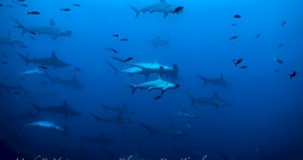 galapagos diving