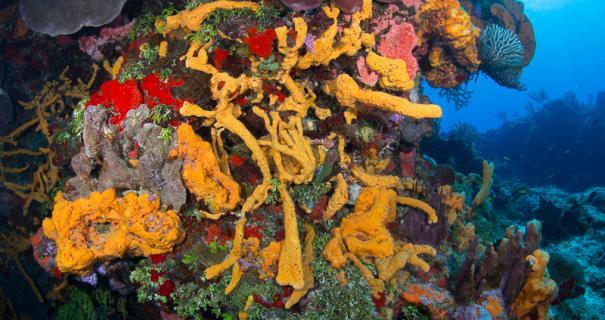 A swim-through at Palacar Deep