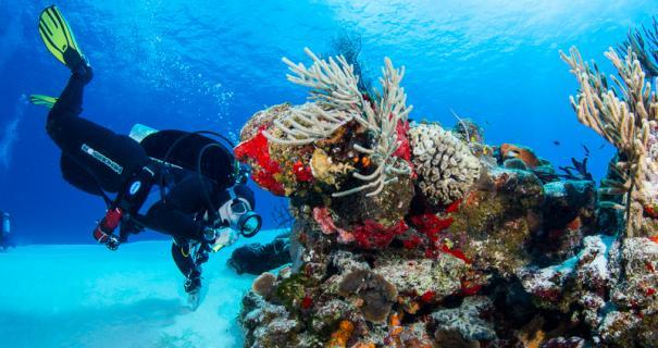 A diver admires a small critter