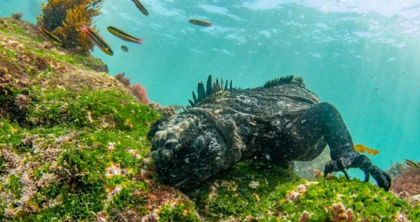 Galapagos Trip Report 2019